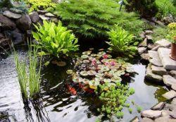 Правильно выбрав растения для пруда на даче, можно придать своему участку неповторимый вид