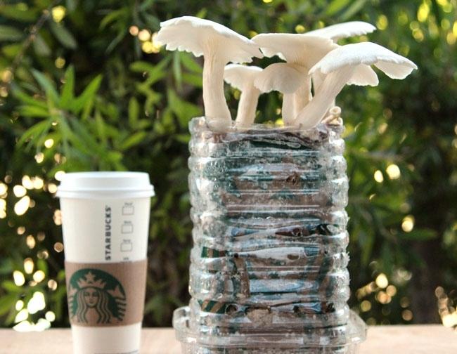 Кофейная гуща очень подходит для некоторых видов грибов