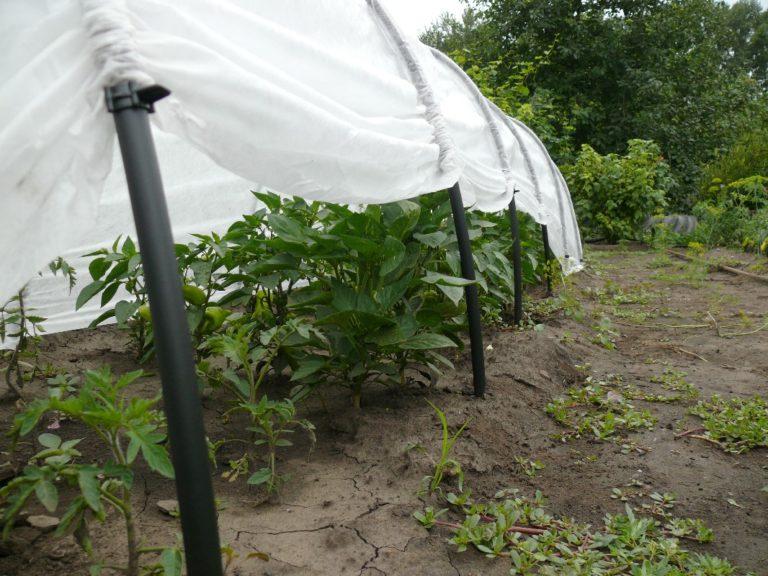 Небольшие и недорогие сооружения Огурчик смогут гарантированно сберечь урожай