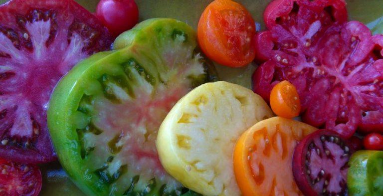 Ежегодно селекционерами выводятся новые сорта помидоров