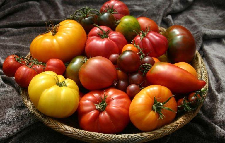 Сорта томатов для теплицы отличаются своим многообразием