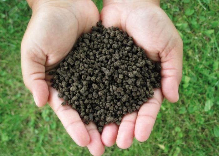 Суперфосфат помогает растению быстрее зацвести