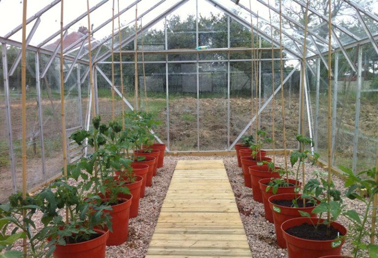 Помидоры - теплолюбивое растение, которое не терпит низких температур