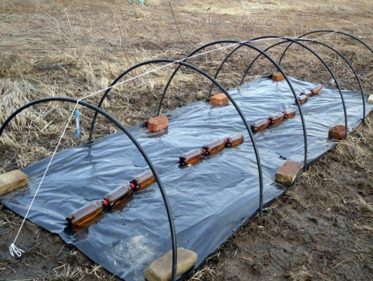 В основном, чтобы помидоры акклиматизировались на новом месте, достаточно сохранять ростки под укрытием 5 дней