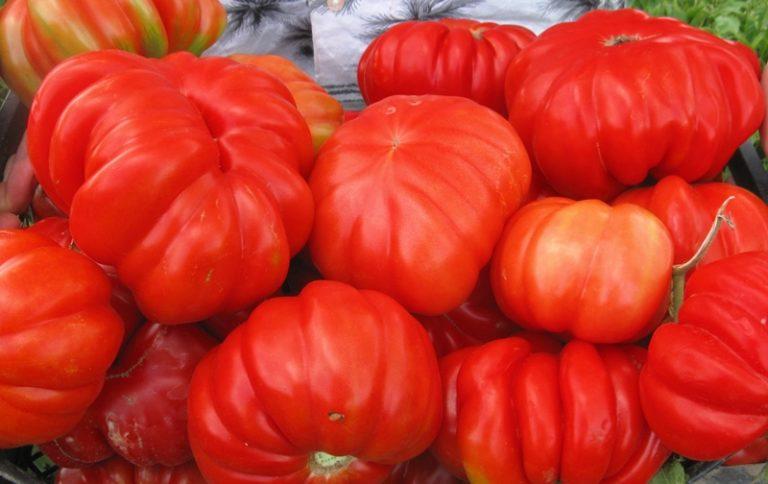 Данная разновидность была селекционирована казахскими учеными-агрономами и, благодаря своим замечательным адаптационным и вкусовым качествам, быстро завоевала популярность среди огородников-профессионалов и любителей