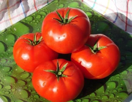Порадовать ранним урожаем способны помидоры Андромеда