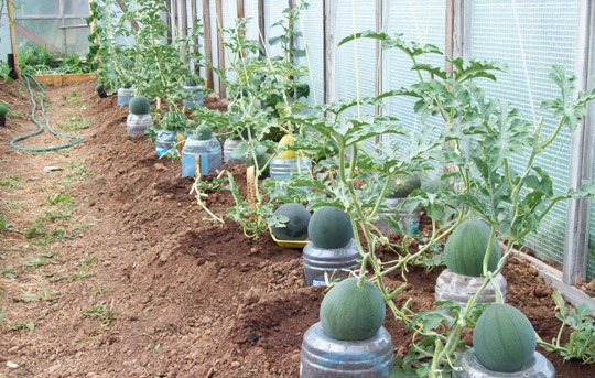Для плодов делают специальные подставки из пластмассы или дерева