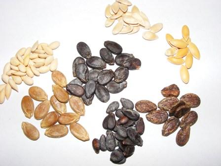 Выбирая семена, нужно обязательно отдавать предпочтение сортам, приспособленным к выращиванию в конкретном климате