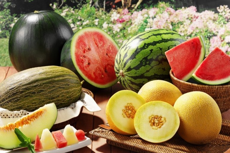 Придерживаясь описанных правил можно вырастить сладкий арбуз или дыню даже в условиях Сибири, получив прекрасный урожай