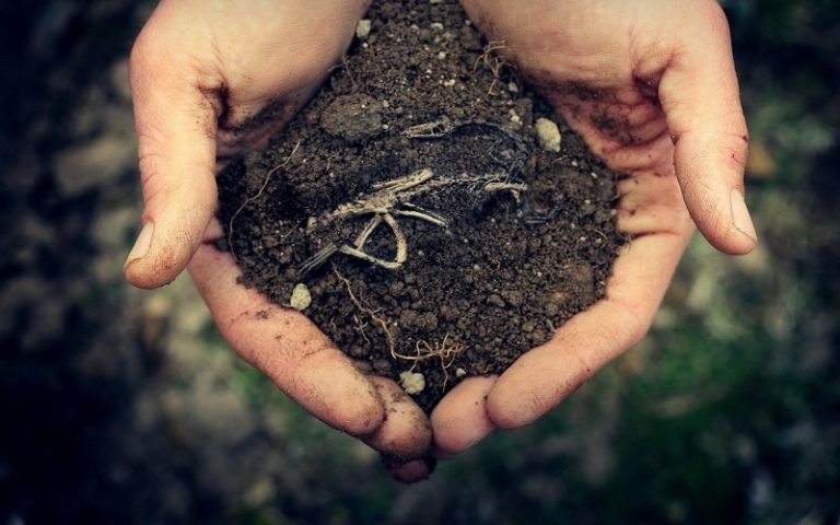 Для хорошего роста и плодоношения им нужно рыхлая почва с большим количеством органики и нейтральной средой