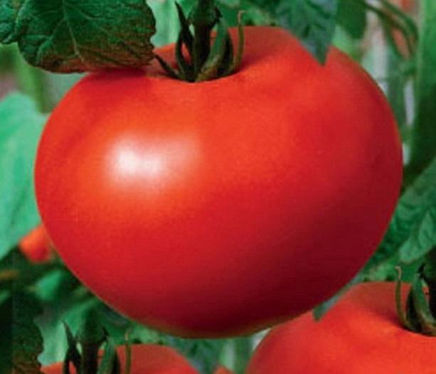Данный сорт томатов стал гордостью селекционеров