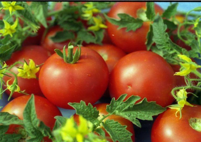 Впечатляет характеристика и описание спелых томатов: плоды сочные, большие (около 100-120 г) и округлые