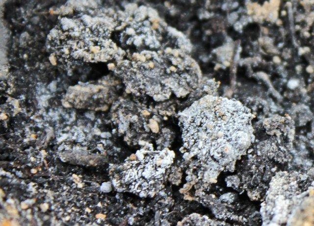 Повышенная влажность, сохраняющаяся в парнике, и повышенная температура являются идеальной средой для грибков
