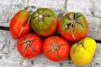 Должному росту кустов и богатому урожаю томатов может помешать появление какой-либо болезни