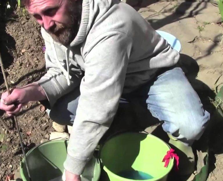 Для обработки томатов необходимо приготовить 1%-ый раствор бордосской жидкости
