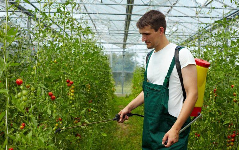 Обработка должна быть равномерной, для чего пользуются, например, садовым опрыскивателем с мелким наконечником