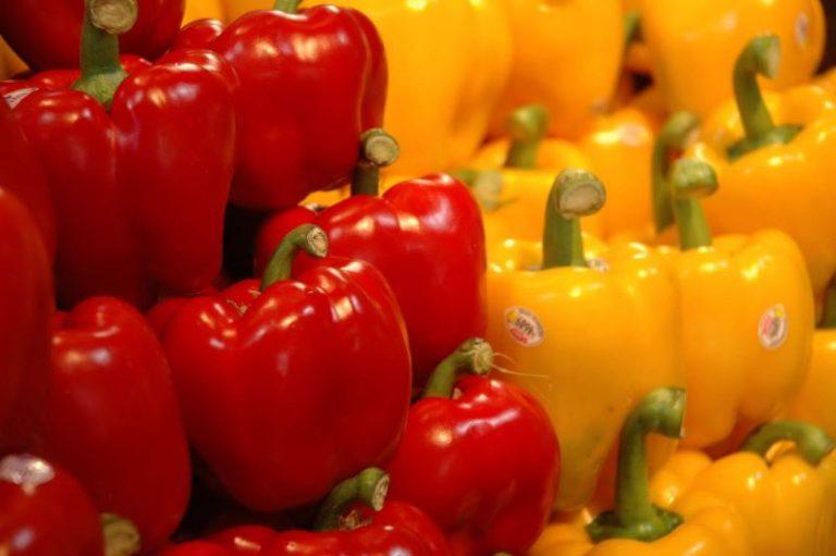 Из-за болезней культуры вырастить сладкий перец совсем не так просто, как кажется сначала
