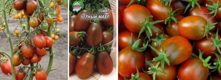 Приобрел свое необычное название помидор из-за окраса. Таким цветом он обязан веществу антоциан, который является сильным антиоксидантом