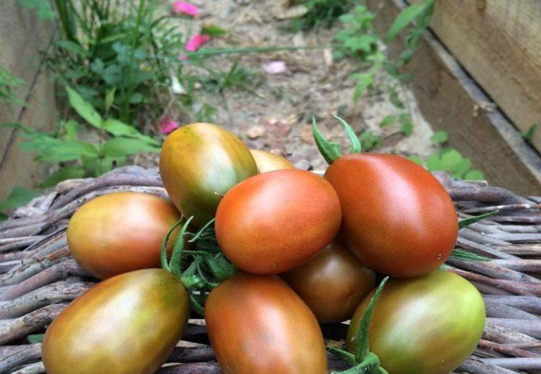 Плоды овоща толстостенные, с плотной мякотью и характерной вытянутой сливообразной формой