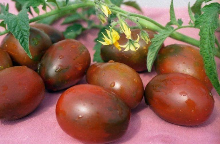 Де Барао. Высокоурожайный сорт с красивыми фиолетовыми плодами, напоминающими сливы