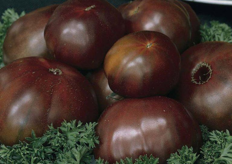 Черный мавр. Это, пожалуй, самый известный и урожайный темноплодный вид