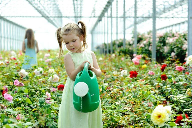 Выращивание цветов в теплице как один из видов заработка будет эффективным только после того, как вы самостоятельно изготовите парниковое сооружение