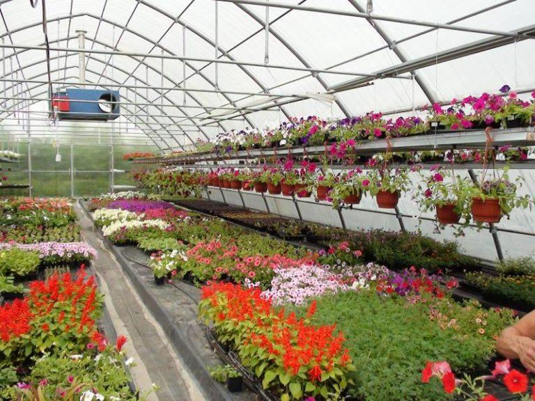 Сооружения для выращивания цветов существенно отличаются от конструкций, в которых произрастают фрукты и овощи
