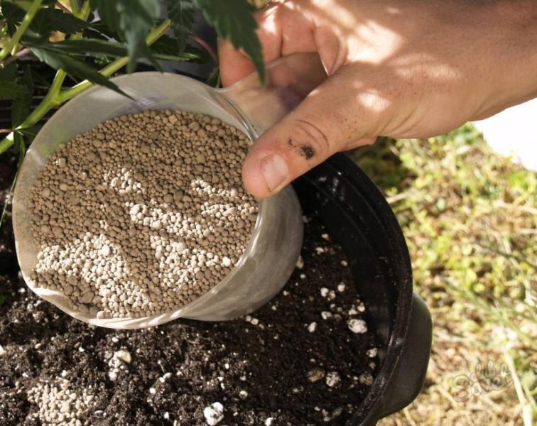 Если в период высадки садоводы большой акцент делают на азотные удобрения с целью ускорения роста зеленой массы, то во время цветения растение нуждается уже в калиевых подкормках