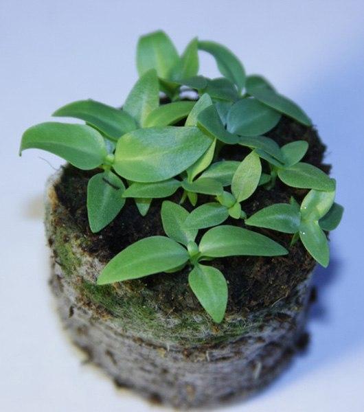 Молодые растения необходимо регулярно проветривать, чтобы они привыкали к свежему воздуху