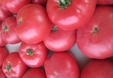 Розовые помидоры имеют у дачников особую популярность. Среди них есть примечательный томат Дикая роза