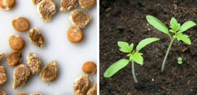 Во всех остальных случаях одна рекомендация: для посева семян нет лучшего времени, чем в период растущей Луны
