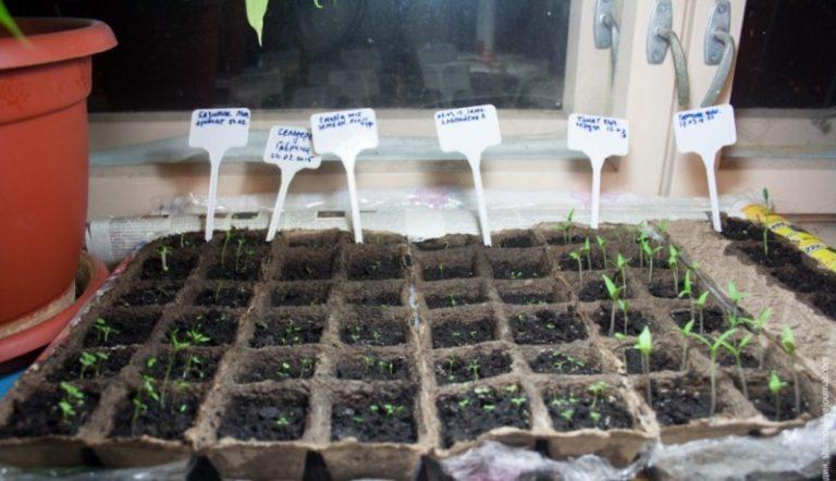 Благоприятные дни календаря для высадки рассады помидоров