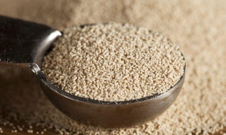 В дрожжах содержатся в большом количестве белки, углеводы, микроэлементы, минералы и витамины группы В