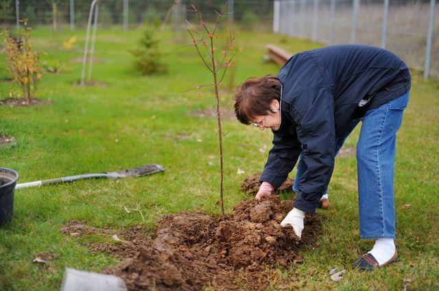 Тёплые дни благоприятны для пересаживания и посадки плодовых деревьев