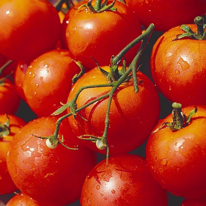 Масса помидоров варьируется от 50 до 110 г