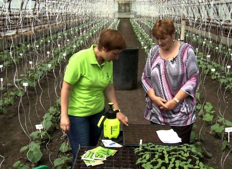 Удобряют растения после полива: по влажным грядкам раствор распределяется равномернее