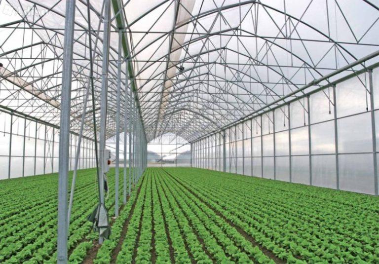 Поликарбонатные теплицы фермера все чаще стали появляться на рынке