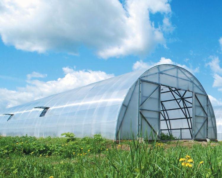 Поликарбонат долговечен — срок службы до 10 лет. Его листы гибкие, это позволяет создавать внешний вид по вкусу фермера