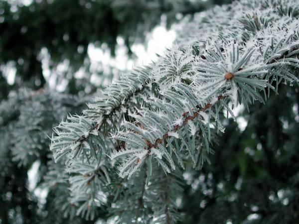 Если 29 декабря есть иней, Святки будут теплыми