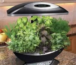 Теплица дома - очень удобное приспособление, благодаря которому можно постоянно иметь у себя свежую зелень или овощи