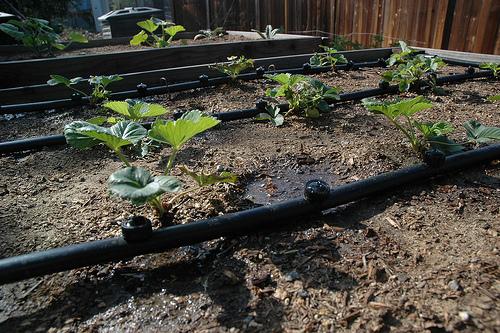 Еще один способ внесения удобрений — это фертигация