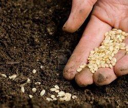 Правильный выбор и грамотная посадка семян в 2017 году по лунному календарю гарантируют высокий урожай