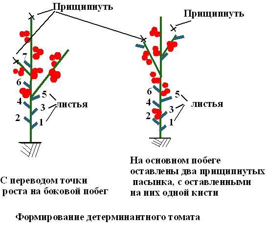 После того как на каждом стебле появились цветочные кисти в достаточном количестве, можно приступить к прищипыванию верхушек