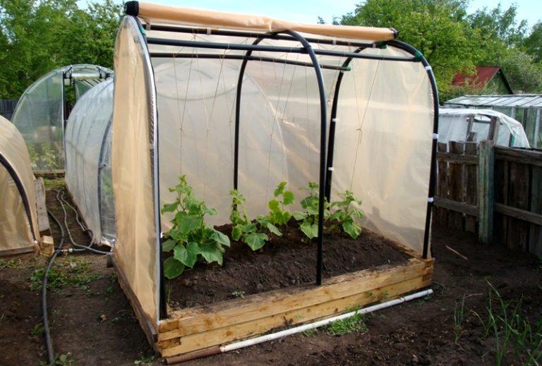 Если парник с обогревом, то садить растения можно прямо в землю. В остальных случаях используются горшки
