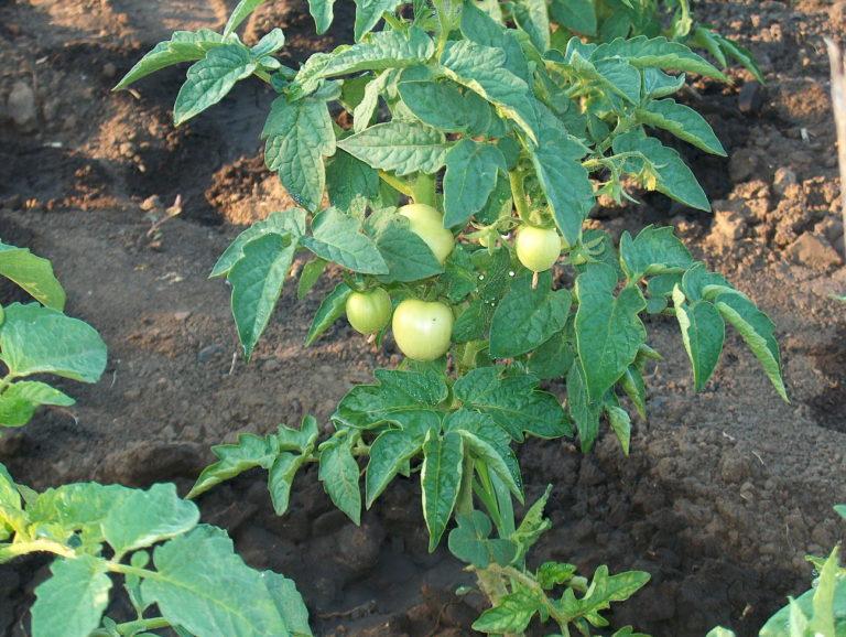Главное — следить за тем, как выглядят растения и своевременно реагировать на их потребности