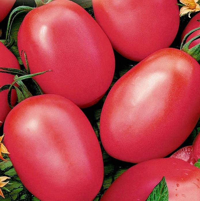 Розовые томаты для открытого грунта более сладкие, в них содержится меньше кислоты, и они не аллергенны