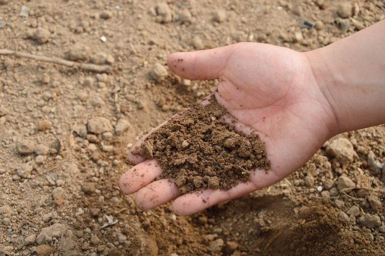 При более ранних манипуляциях проводят замер температуры почвы
