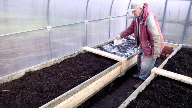 Чтобы избежать заражения растений грибком, обрабатывать нужно не только семена, но и сами теплицы
