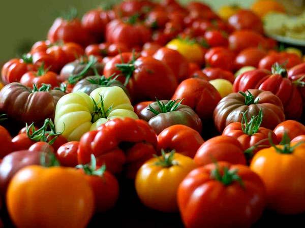 Если оценивать томаты, исходя из содержания в них количества миоцина, то на первое место можно поставить томат желтый, далее идут красные сорта, затем зеленые
