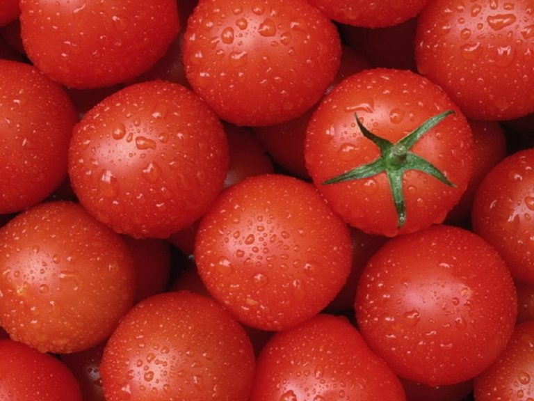У помидоров, которые произрастают на открытых грядках, приятные вкусовые характеристики в отличие от тепличных вариантов